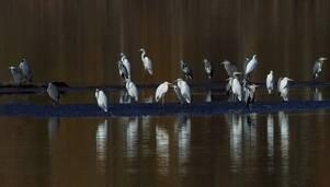 Ptaki na zdjęciach członków Rzeszowskiego Stowarzyszenia Fotograficznego