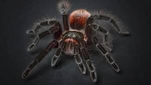Żywe pająki i skorpiony na wystawie w Rzeszowie