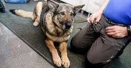 Filmowy poranek dla dzieci: spotkanie z psami ratownikami, darmowe fotolustro